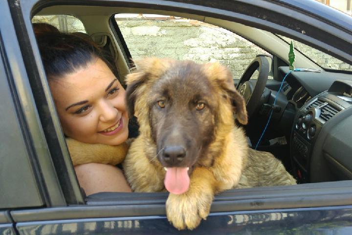 Help Edina save animals in Sarajevo!