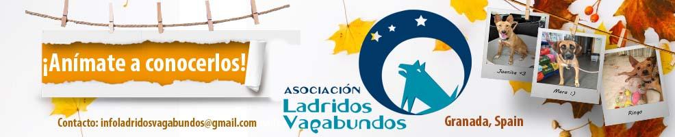 Ladridos Vagabundos - Spain