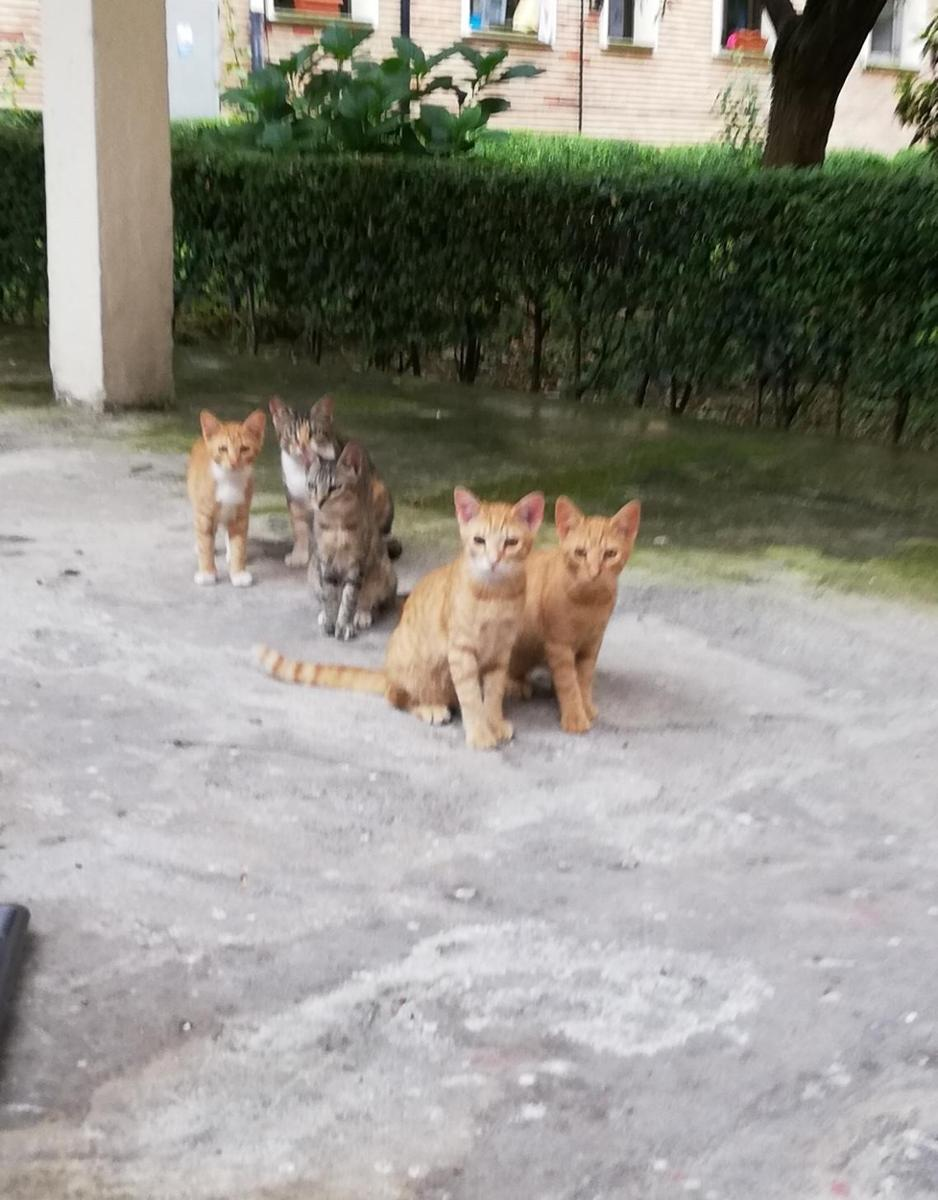 Ayudanos a ayudarles,gatitos (sani elorrieta)