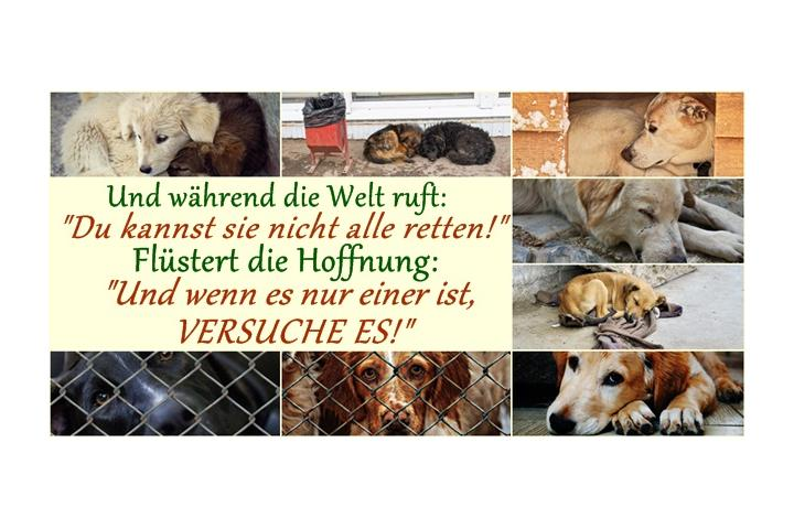 Rumänienhunde e. V. - Help the voiceless