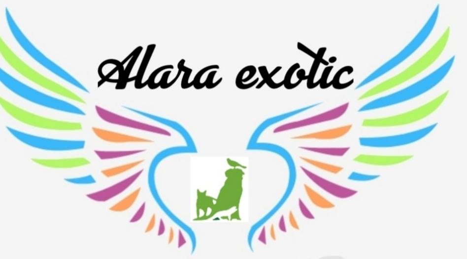 Alaraexotic