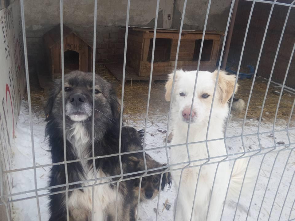 Help the rescue dogs in Radauti/Romania