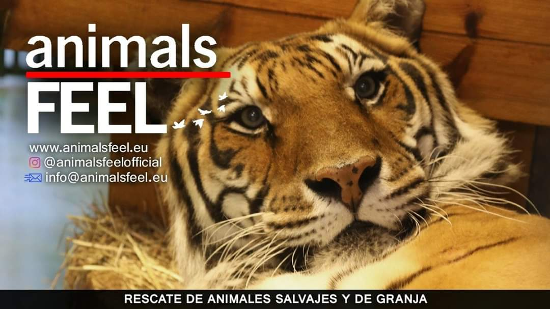 Animals Feel ONG
