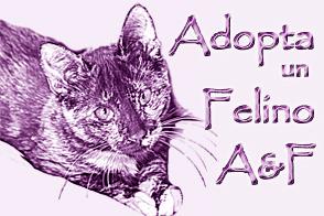 Adopta un felino (A&F)