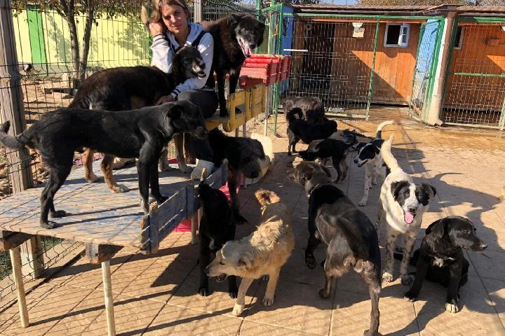 Happy Tails Brasov ❤️ Tierschutzverein