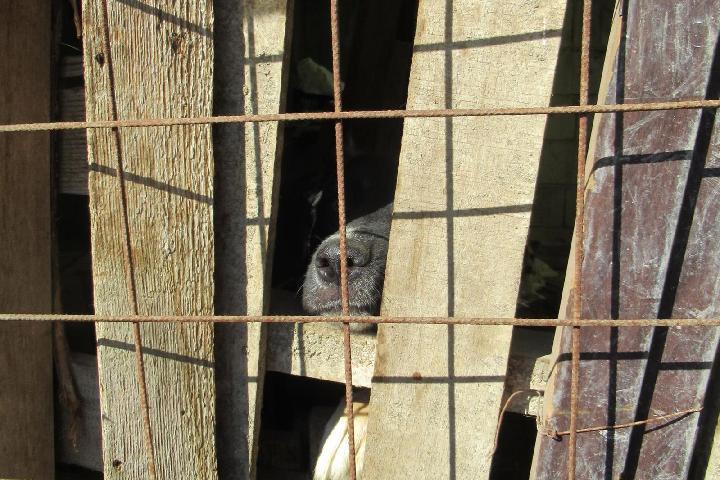 Ensemble pour les chiens Roumains