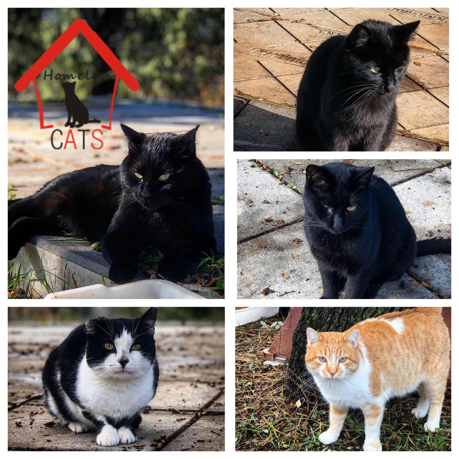 Colonia Reubicada Homeless CATS