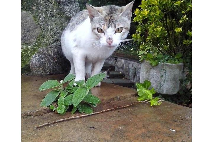 Gats de Sant Joan -Ayuda a gatos de la calle