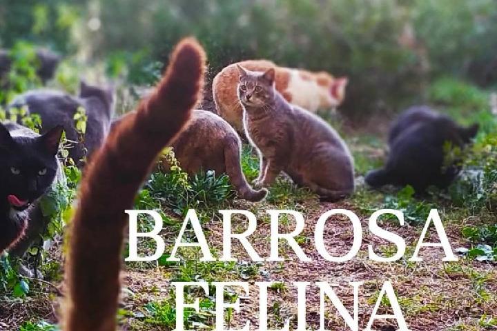 BARROSA FELINA