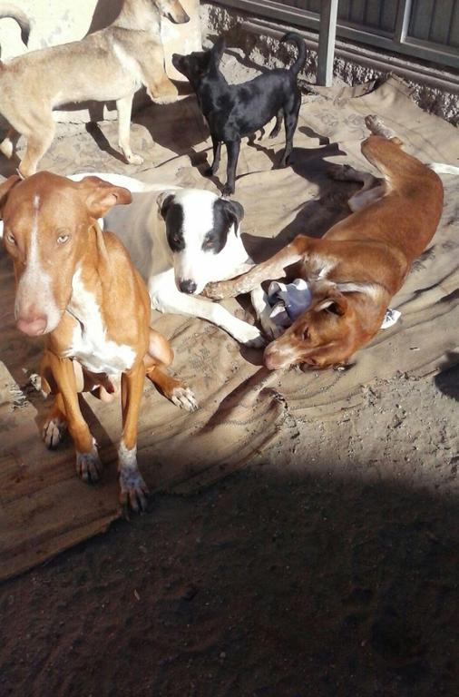 Auxilio Animales en Campohermoso