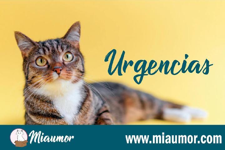 CASOS MUY URGENTES | MIAUMOR