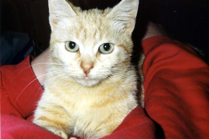 Katzenhilfe-Olli