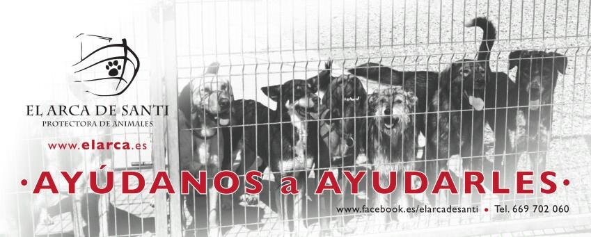 Ellos necesitan comer, Tu puedes ayudarles!!!