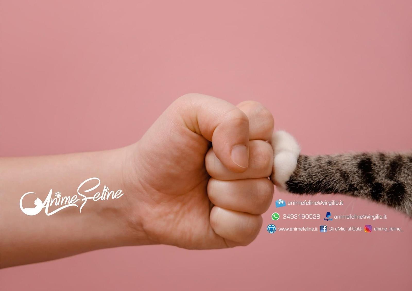 Associazione Anime Feline Odv