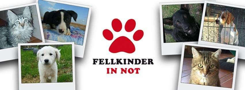 Fellkinder in Not e.V.