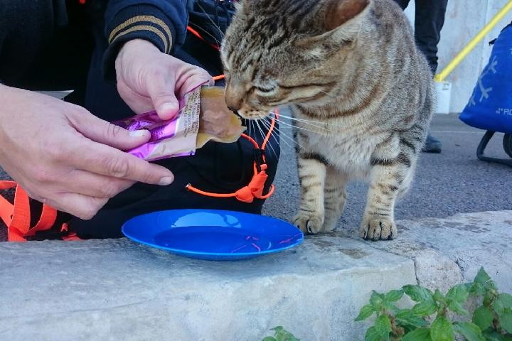 Colonias Gatos Torrevieja-alimentación