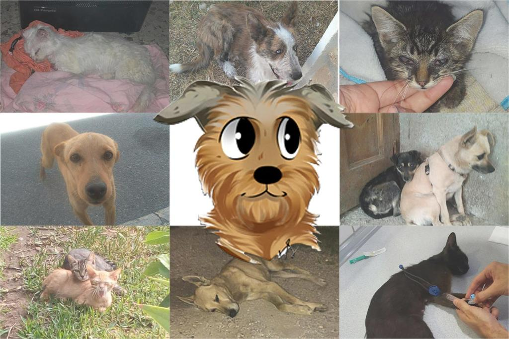 Difusion Animalista