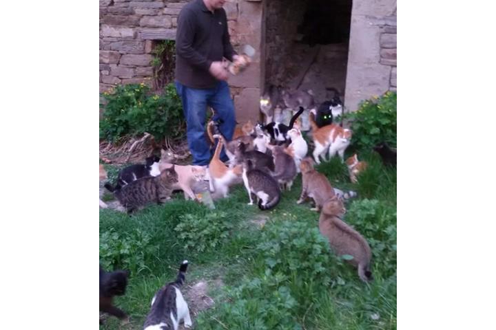 Oasi felina I mici del monastero di Susanna Corazzo