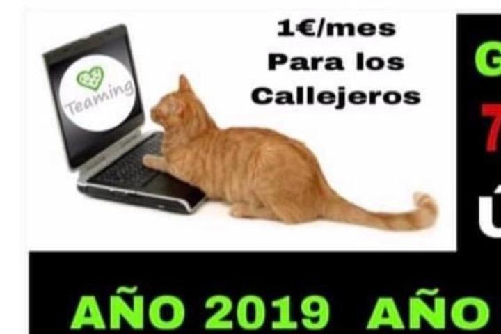 FER HIDALGO AYUDAS COLONIAS FELINAS #CIEMPOZUELOS (ESTERILIZACIONES)