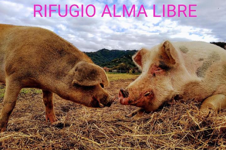 Rifugio Alma Libre