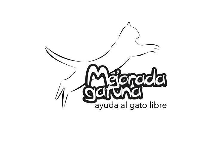 Mejorada gatuna