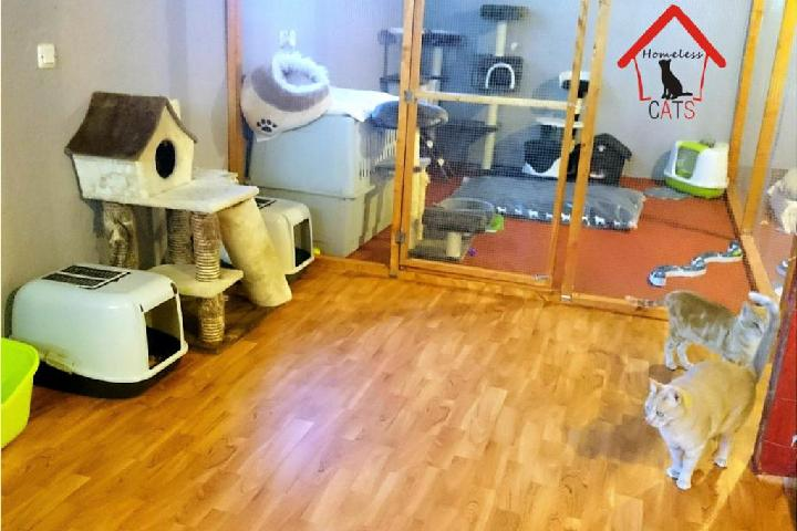 Santuario Homeless CATS