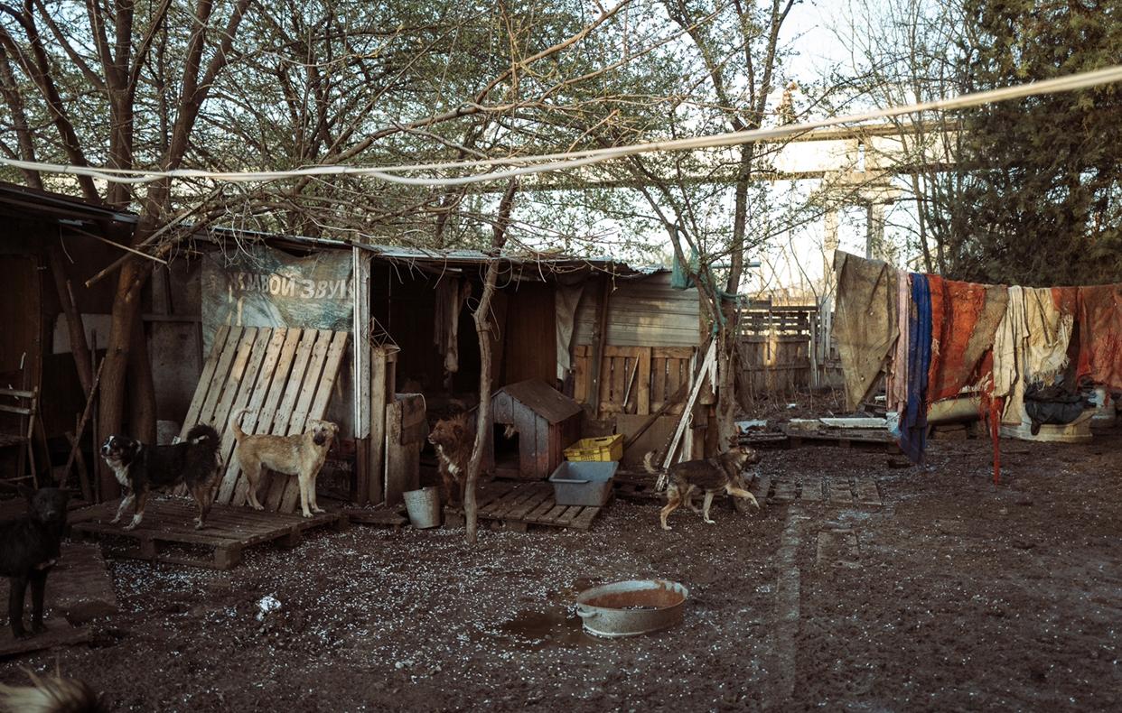 Help for Ukrainian animals