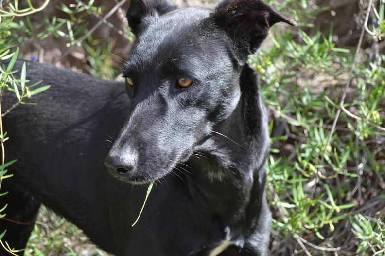 Helft den Hunden auf Gran Canaria