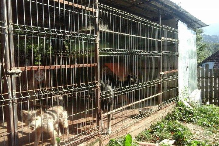 Asociatia Save & Hope for Dogs