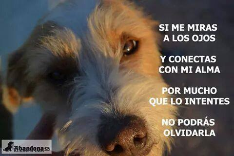 Perros Abandona2 España