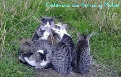 La colonia de Kimi y Miko