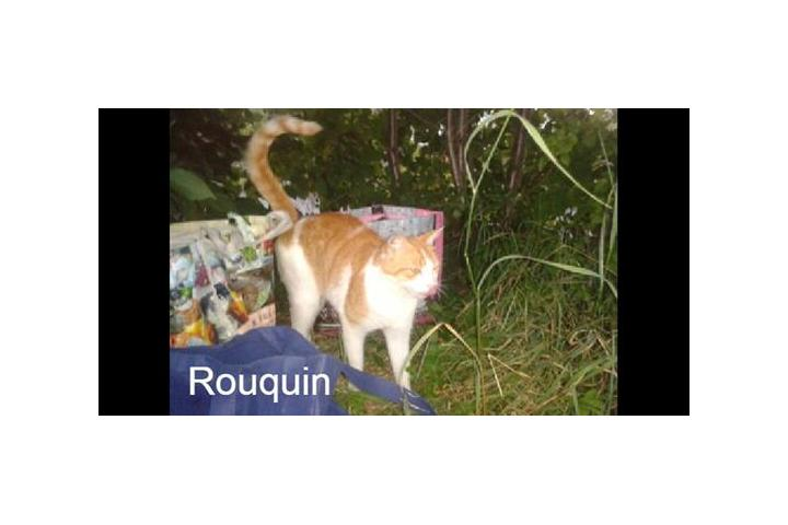 Le Collectif Chats Libres Citoyens