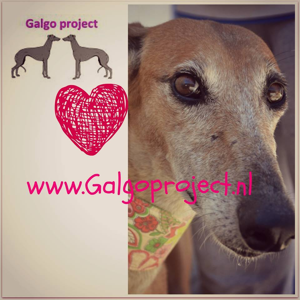 Galgo Project
