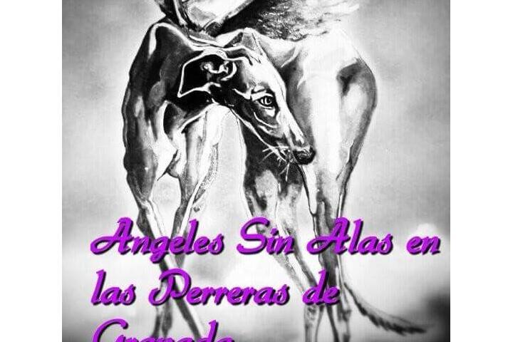 Ángeles sin alas en las Perreras de Granada