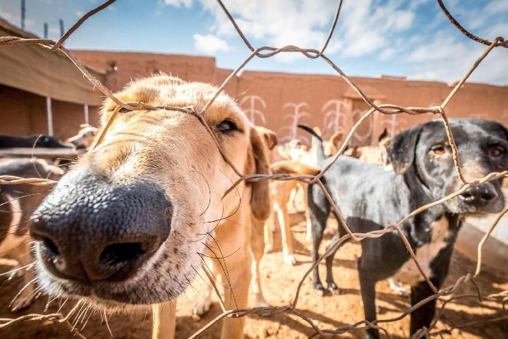 Sunshine Animal Refuge Agadir