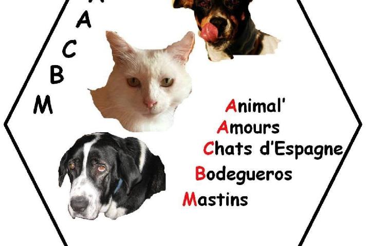 Animal' Amours. Chats d'Espagne. Bodegueros. Mastins