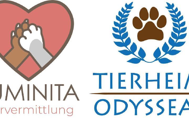 Luminita Tiervermittlung -Hilfe für das Tierheim Odysseas e.V.
