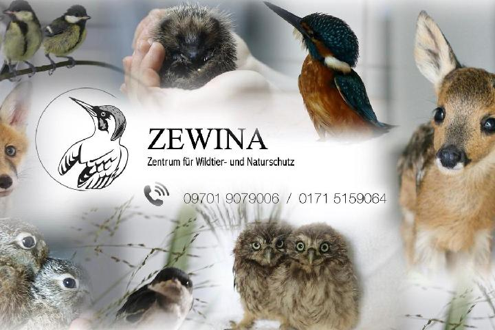 ZEWINA