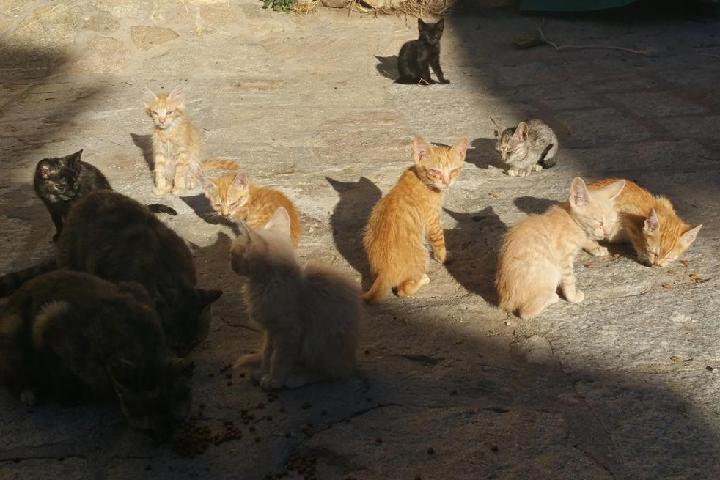 C.E.S Gatos La Acebeda