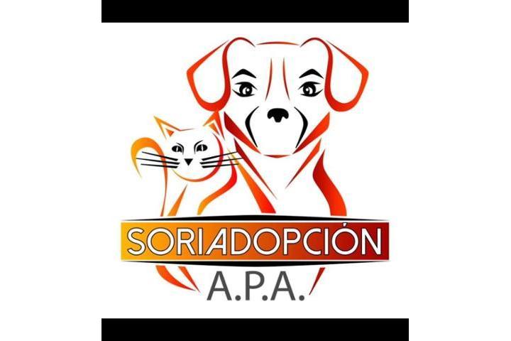 APA Soriadopción
