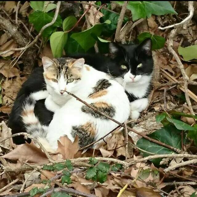 Gatos ponchito