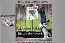 Adopcion felina(Refugio y colonias )