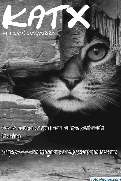 KATX Felinos Navarra