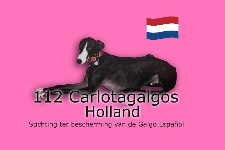 112CarlotaGalgos Holland