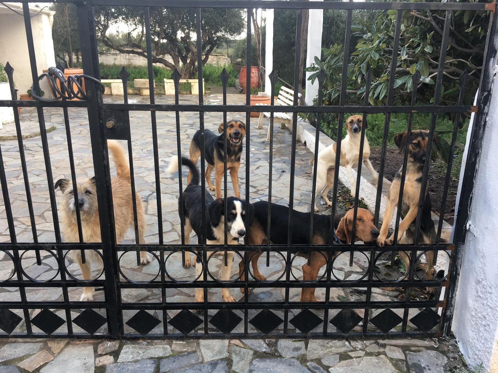 Shirins Lucky Rescues
