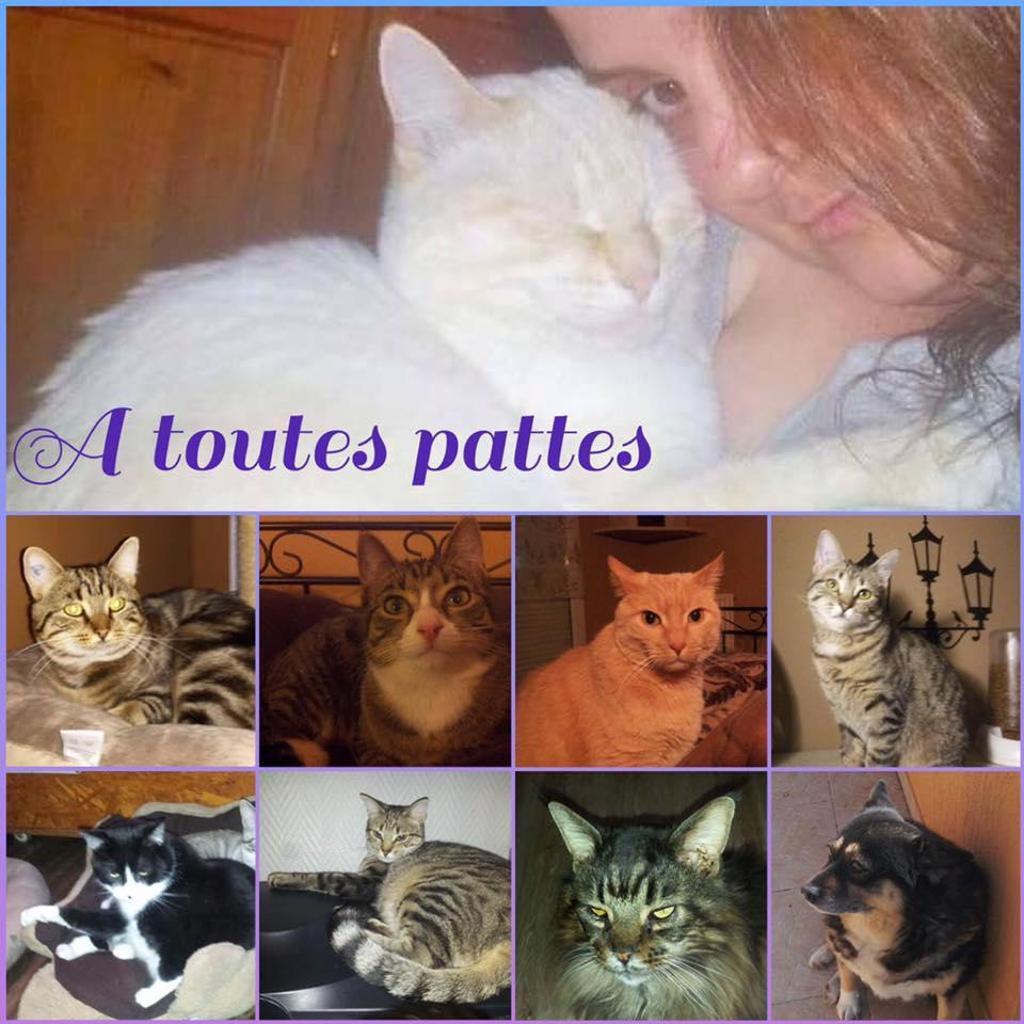 A TOUTES PATTES
