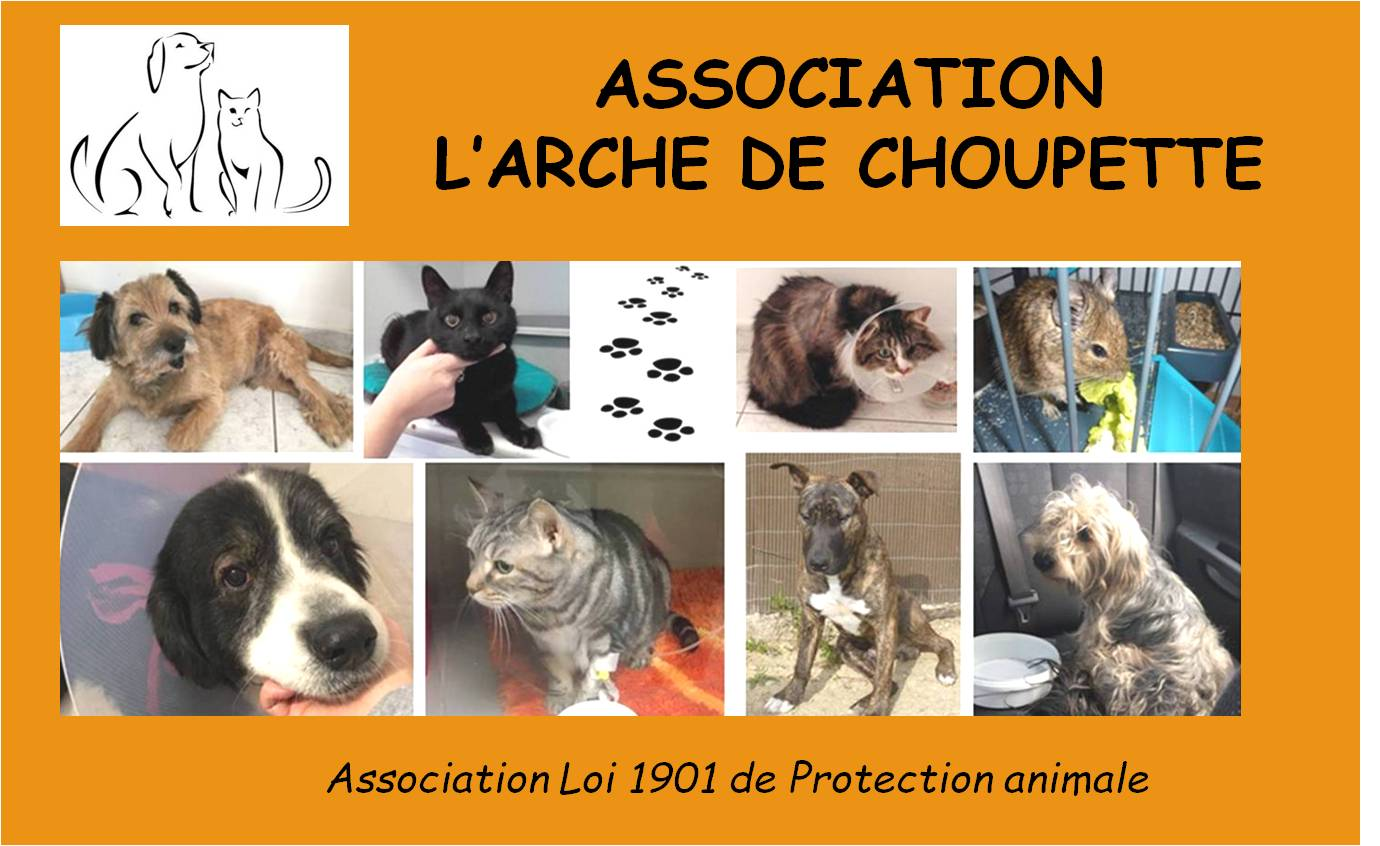 Association l'Arche de Choupette