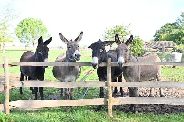 Heehaws - for the Love of Donkeys