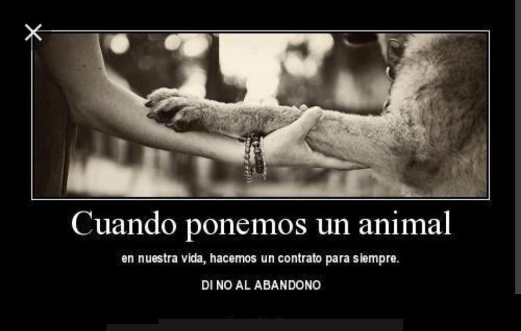 Vida animal