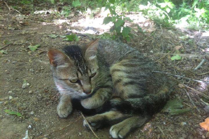 Associació de gats Sta Margarida i els Monjos
